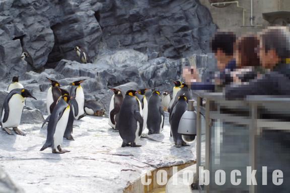 札幌から旭山動物園アクセス旭山動物園号