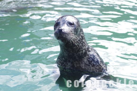 おたる水族館小樽観光ペンギンショートド料金